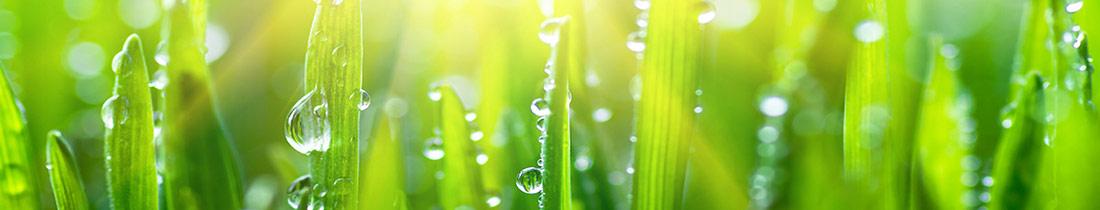 Energia Humin foliar fertilizer