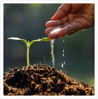 Phylazonit szolgáltatás talaj regeneráló